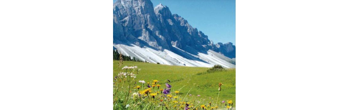 Tee aus Südtirol. Verschiedenste Kräuter- und Früchetees