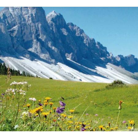 Tee aus Südtirol